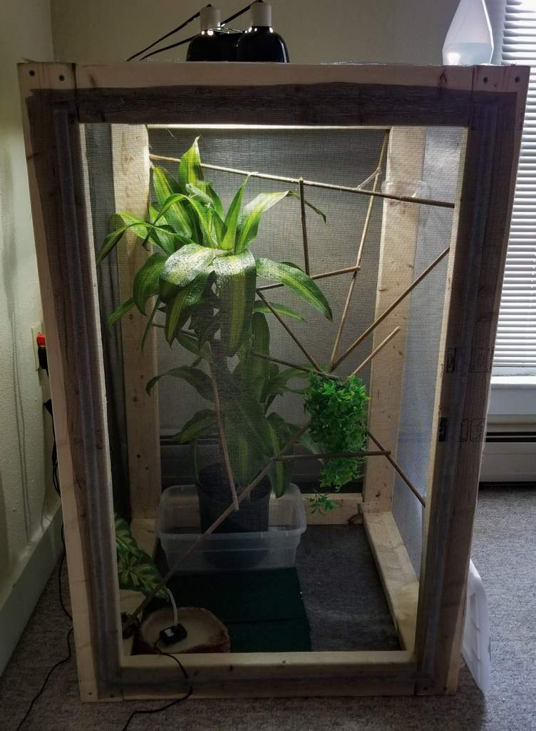 Weekend Project Veiled Chameleon Enclosure Reptiles Amino