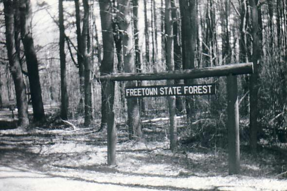 Image result for 10. Freetown-Fall River State Forest, USA
