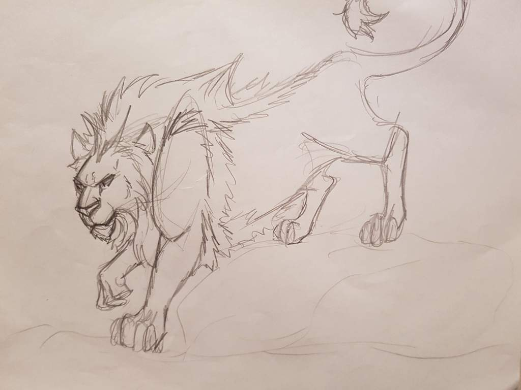 Lions mythical lions sketches completed drawings