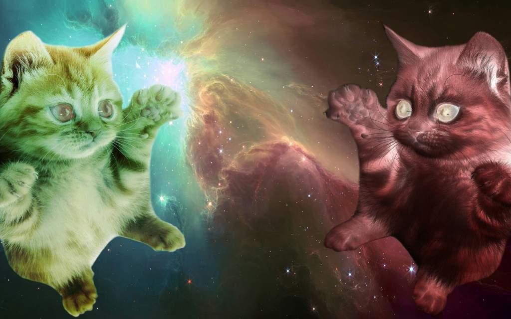 картинки с кошками в космосе проток