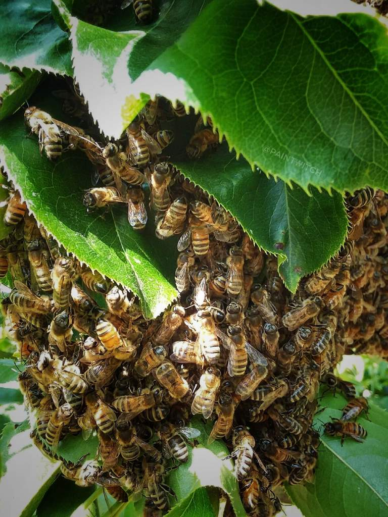 Bees in Magick/Spell Work Prt 2: History of the Bee | Pagans