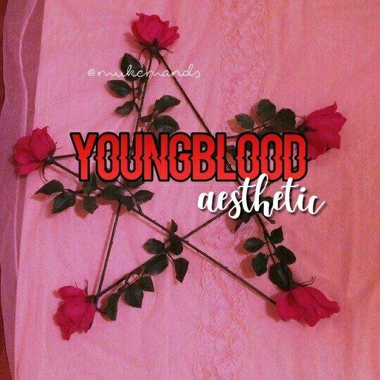 Youngblood Aesthetic 5sosfam Amino