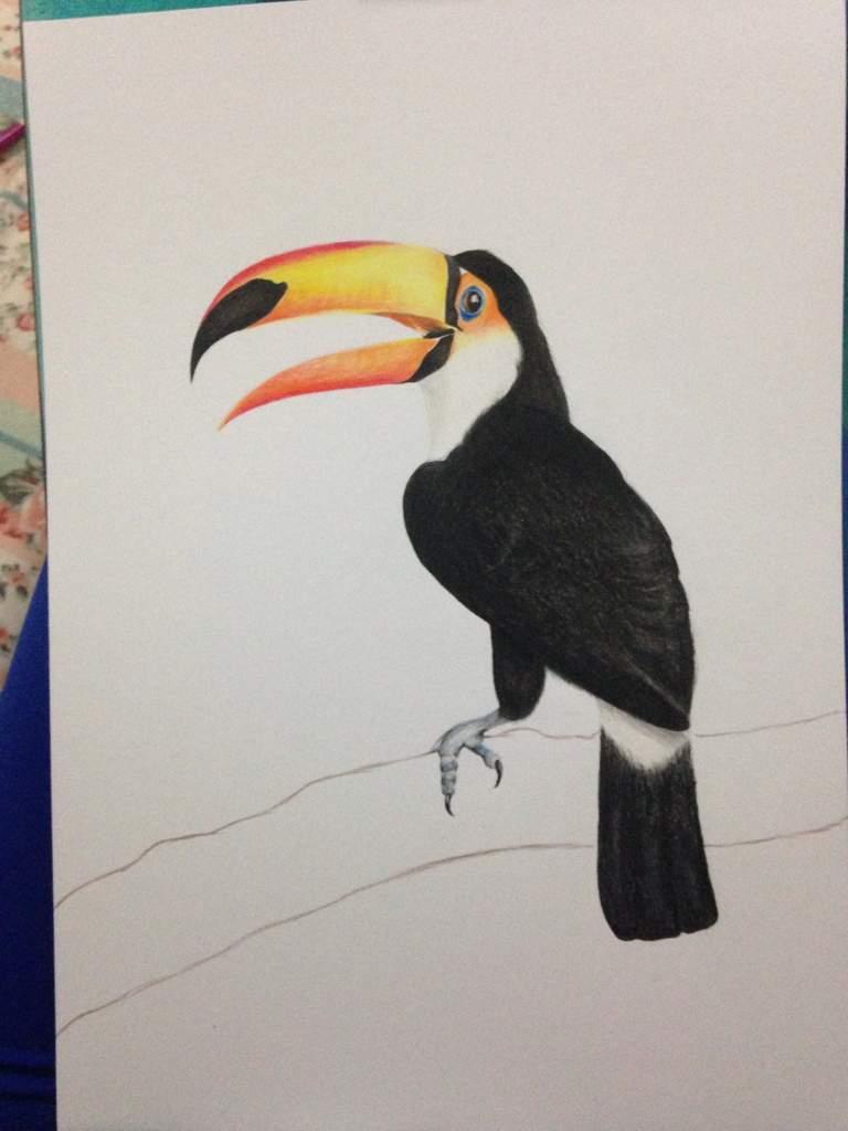 Desenho Realista Tucano Desenhistas Do Amino Amino