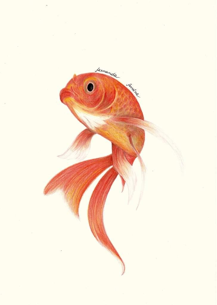 Desenho Realista Peixe Desenhistas Do Amino Amino