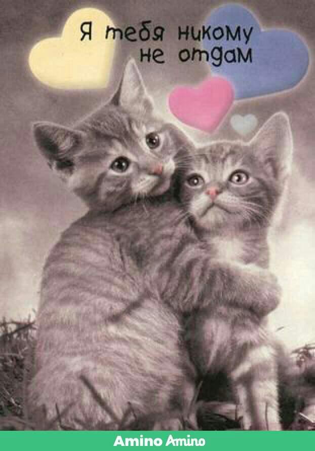 Железная, картинки с надписями любимому котенку