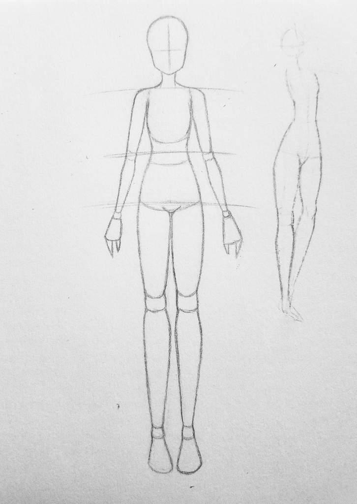 Anatomy Proportions Female Art Amino