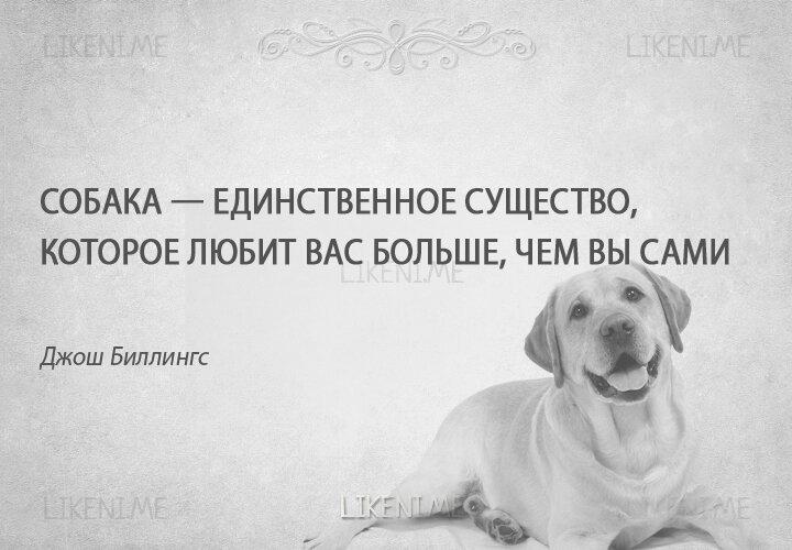 Цитаты с картинками собак