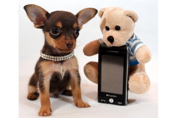 картинки с карманами собаками того, серёжка создаёт