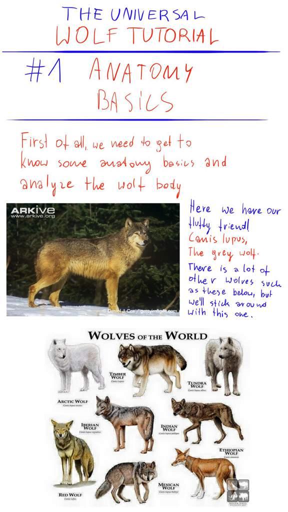 The universal wolf tutorial | Wolf Amino Amino