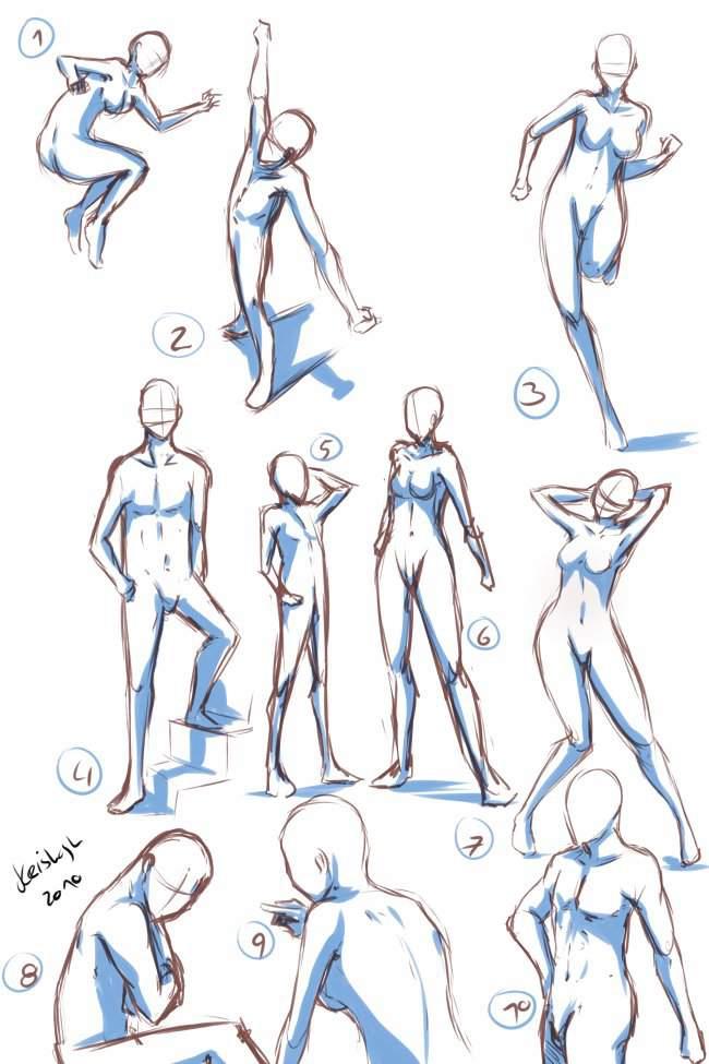 Human Anatomy And Poses Art Amino