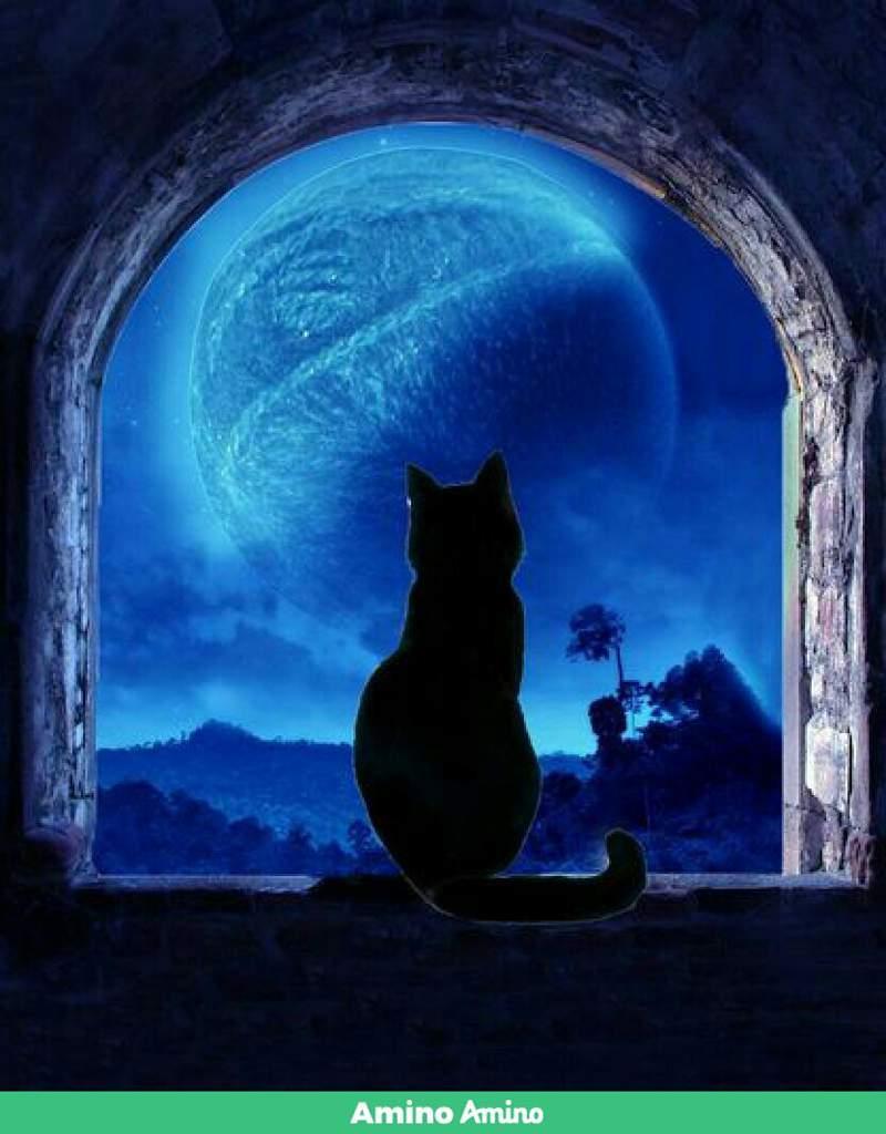 такое кошки под луной картинки данный момент