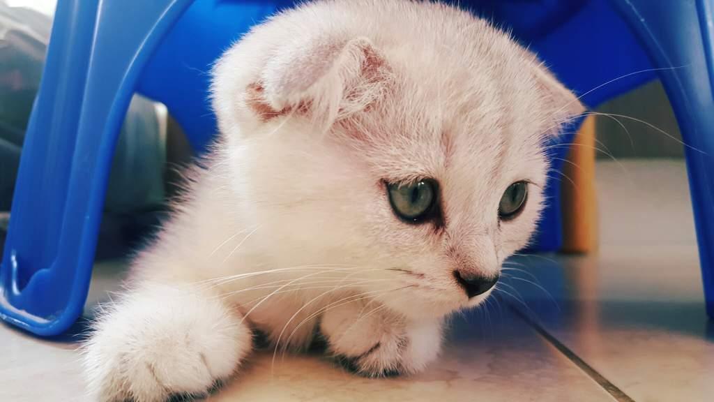 A Photoshoot Cats Amino