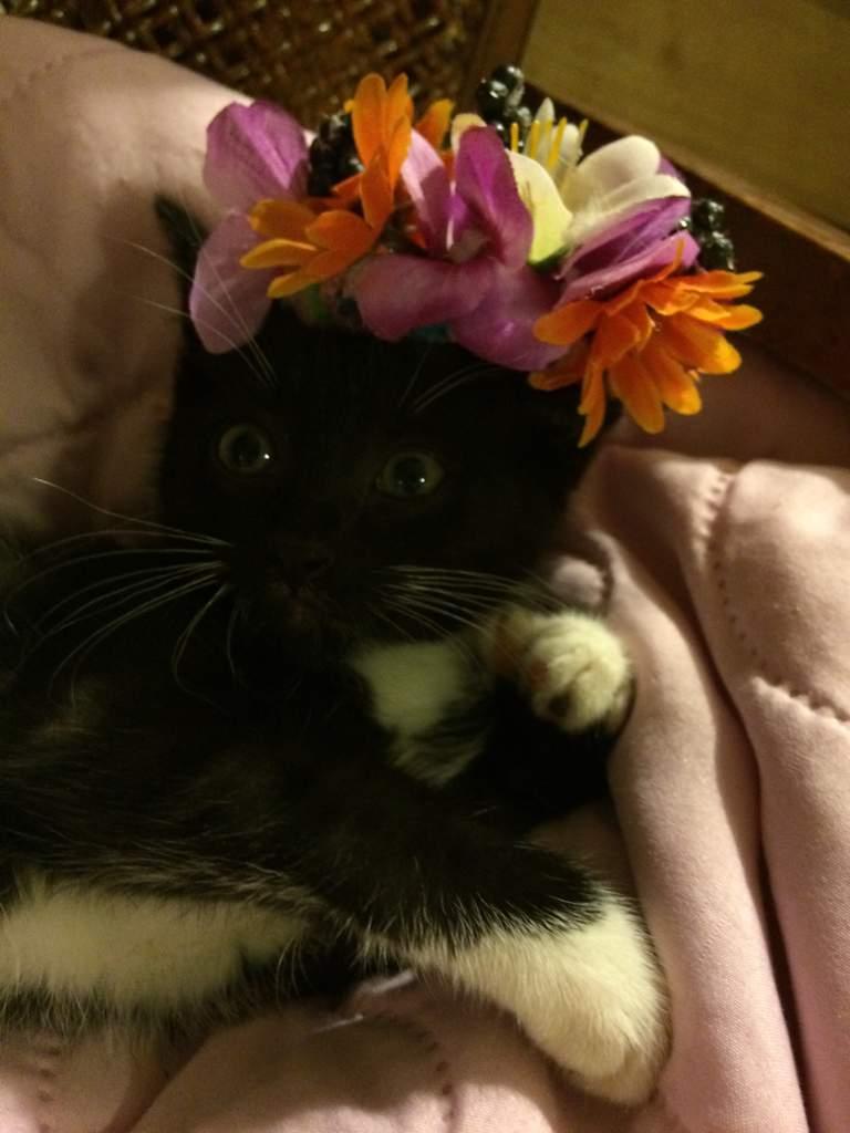 Cat Flower Crown Tutorial Cats Amino