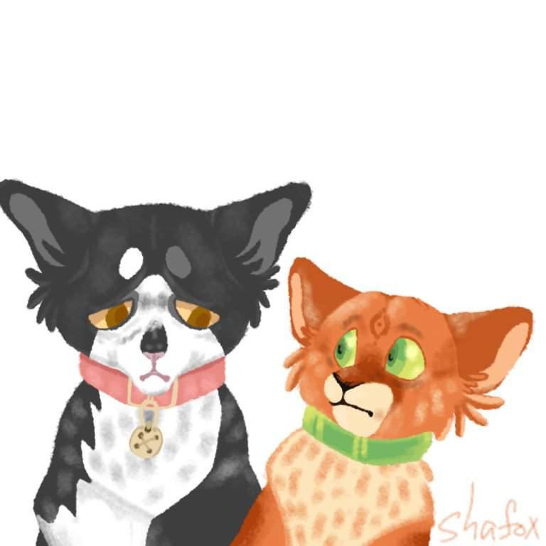 Рыжик | •° Коты-Воители •° Amino | 768x768