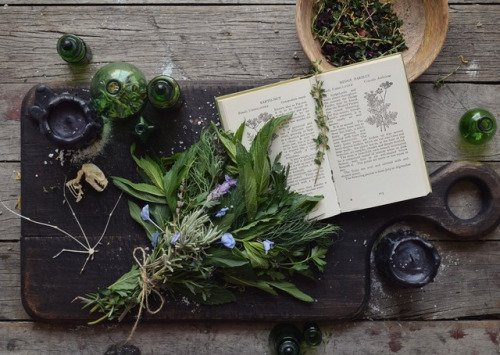 13 herbs for luck and success | The Witches' Circle Amino