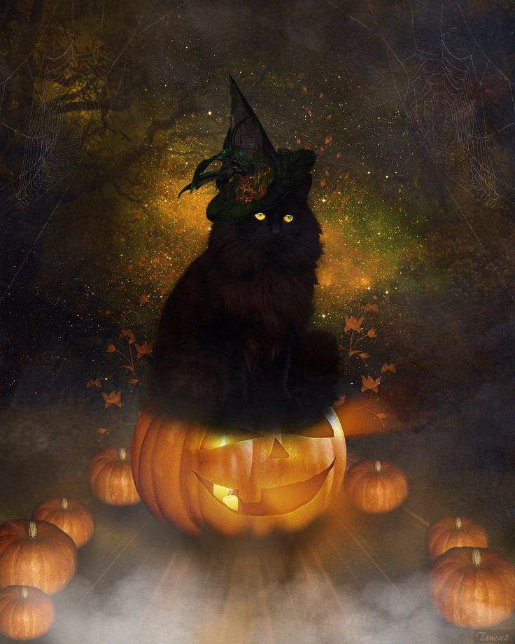 Черный кот ведьмы картинка