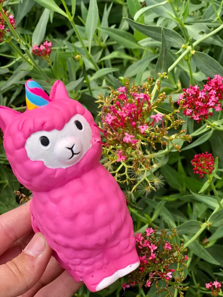 Pink Unicorn Alpaca With Some Pink Pretty Flowers Squishy Love Amino