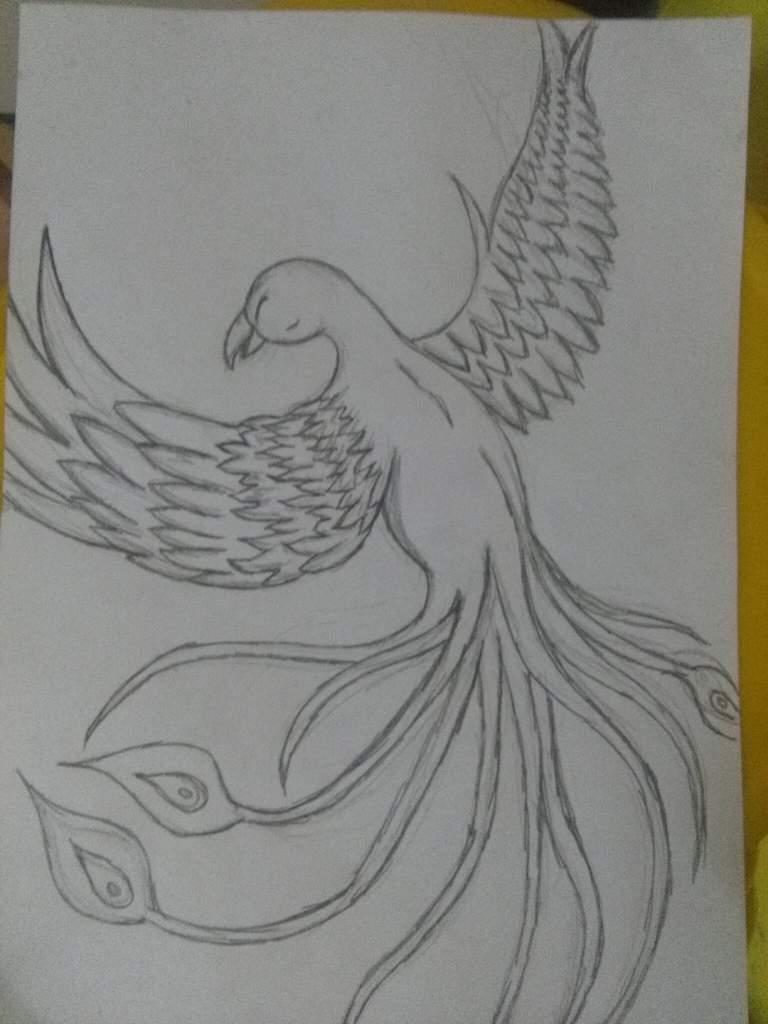 Ave Fenix Grafito Mipropioarte Dibujarte Amino