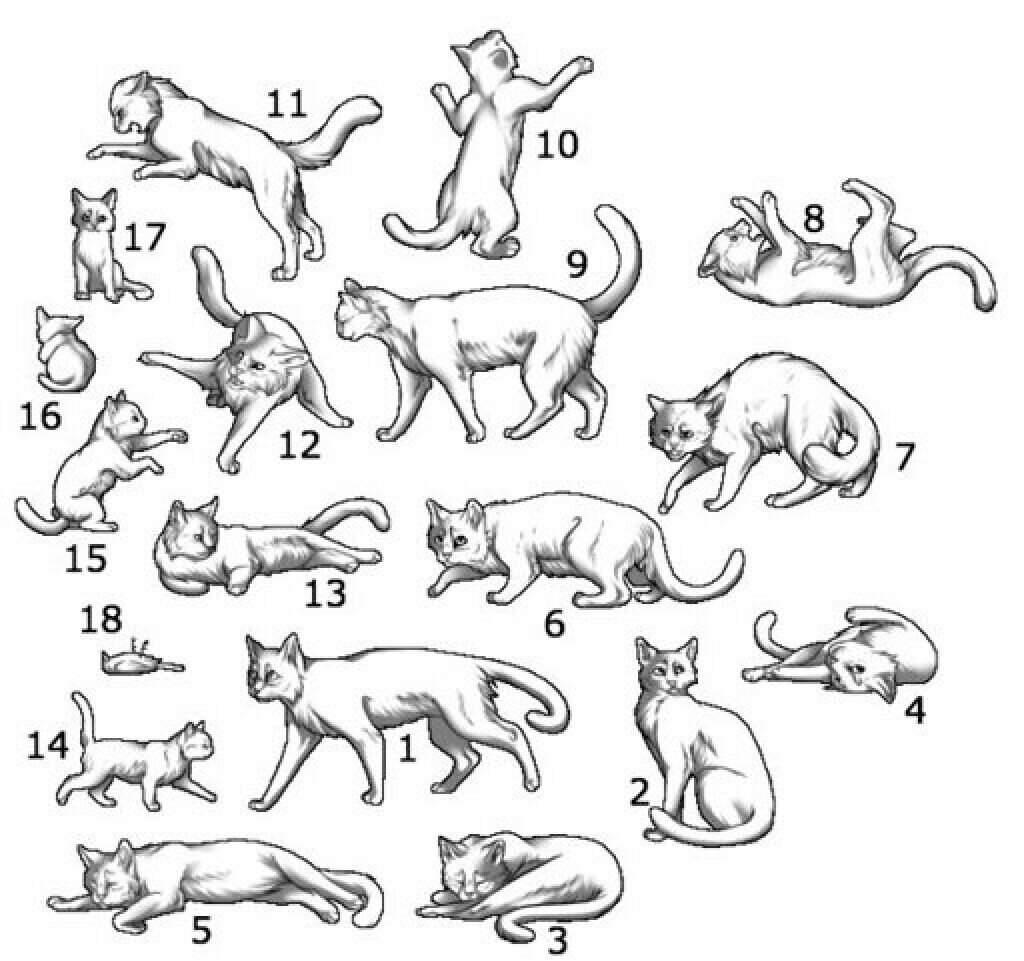 Картинки поз котов еще