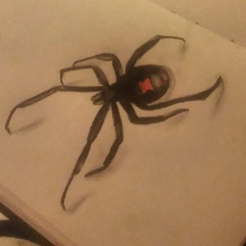 Black Widow Spider Drawing Art Amino