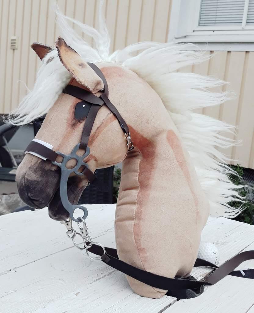 Hobby Horse Photography Equestrian Amino