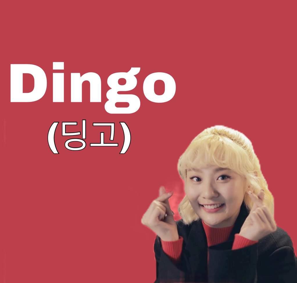 Dingo (딩고) | #DramaHuntersS | K-Drama Amino