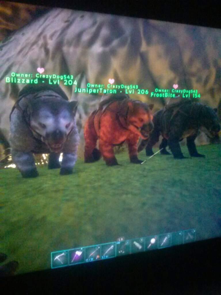 I Tamed The Thylacoleo Ark Survival Evolved Amino