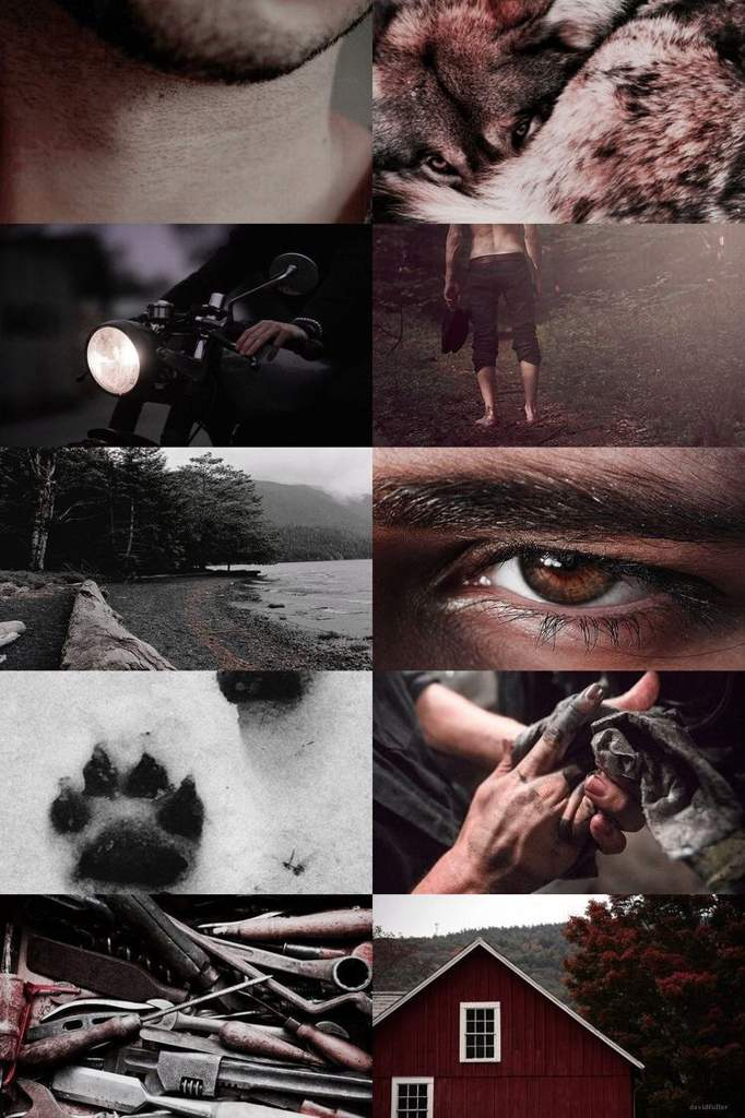 Team Edward vs Team Jacob Aesthetic | The Twilight Saga Amino