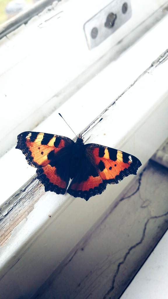 Butterfly | Pagans & Witches Amino