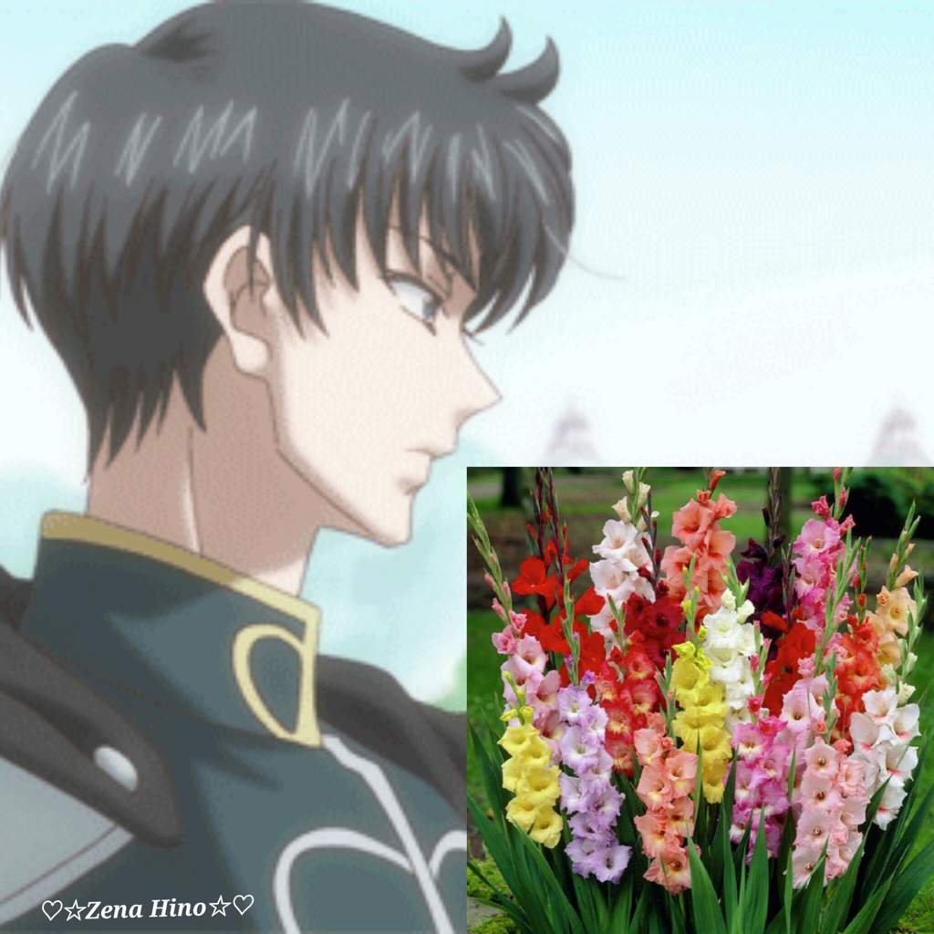 This long lasting flower comes in a variety of colors like