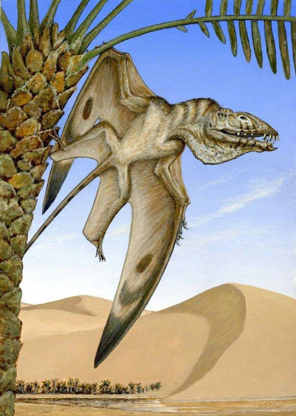 4.0) Nuevo Pterosaurio del tríasico de Utah. | Amino Paleontología Amino