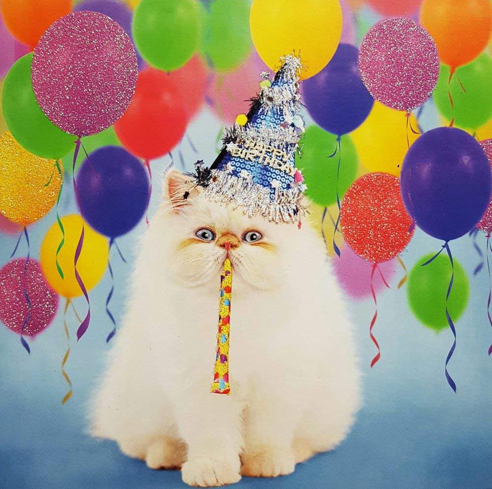 День рождения кошки ютуб
