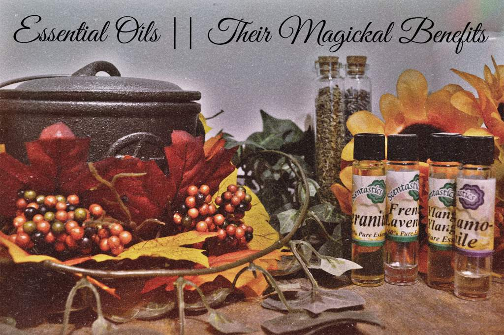🔮Essential Oils: Their Magickal Benefits🔮 | Pagans & Witches Amino