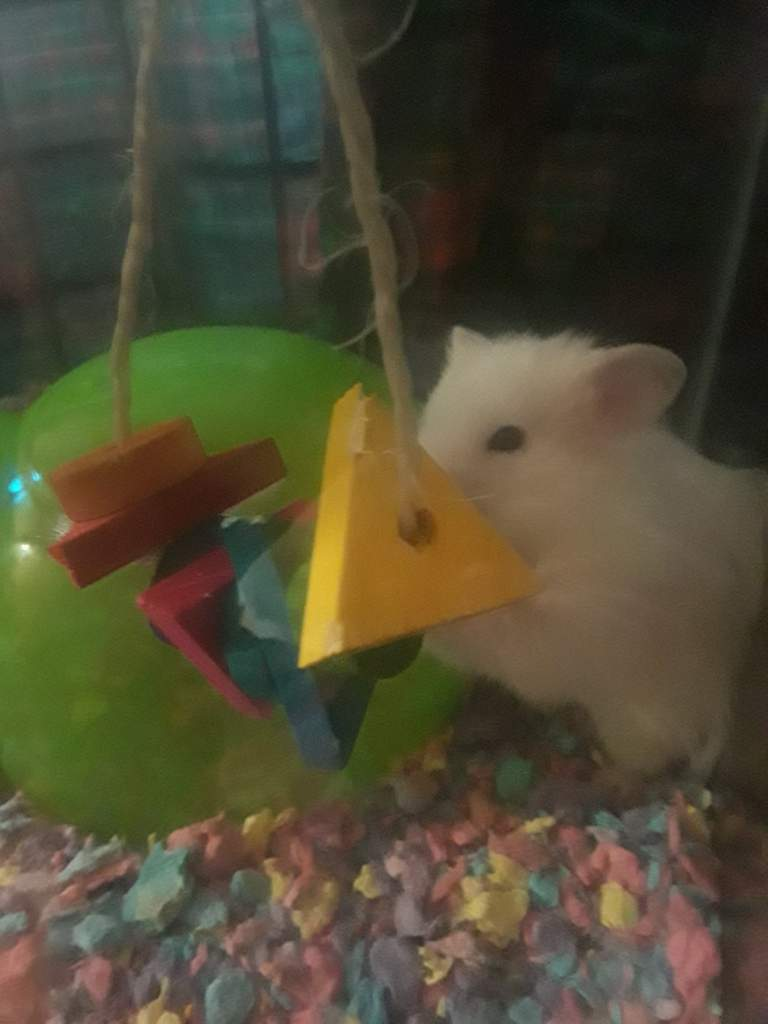Hack for hanging toys in a glass rodent enclosure | Rodents