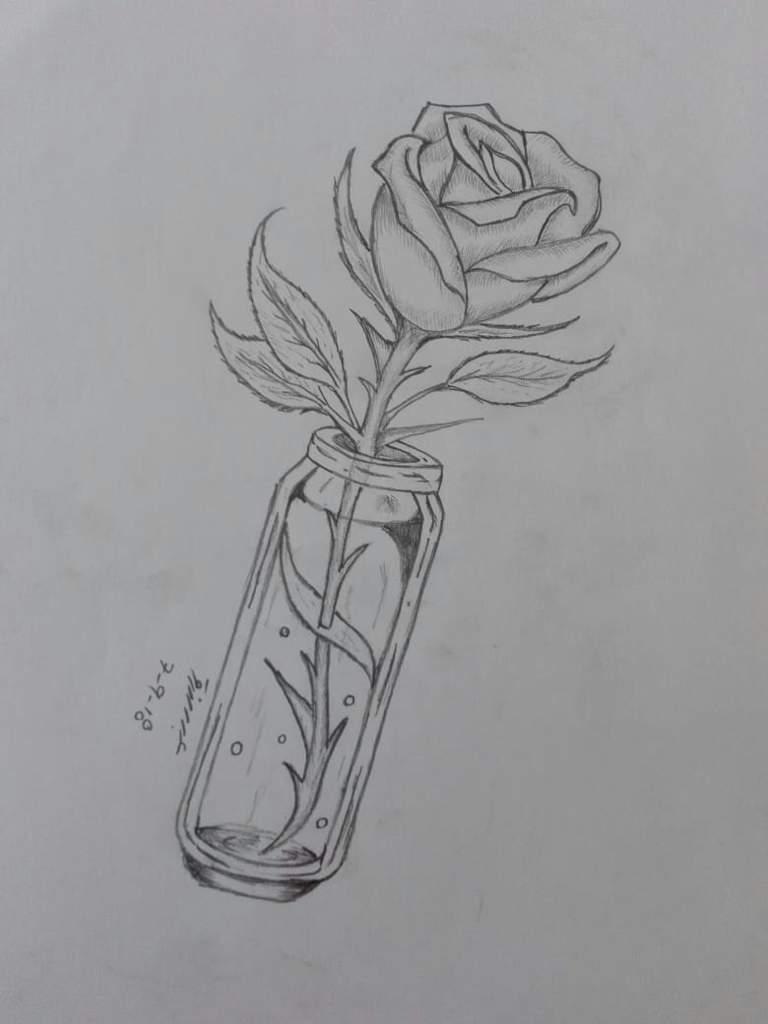 Rose pencil sketch art amino