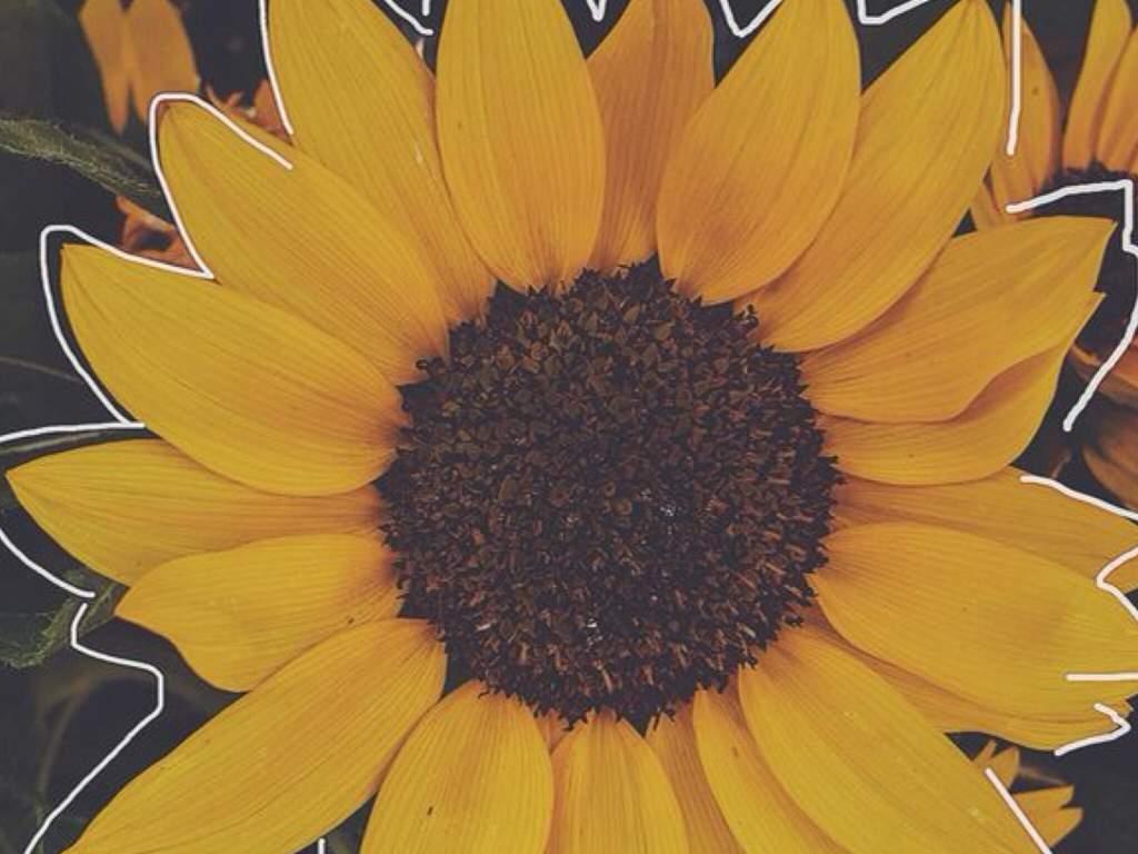 Setembro Amarelo. </div></body></html>