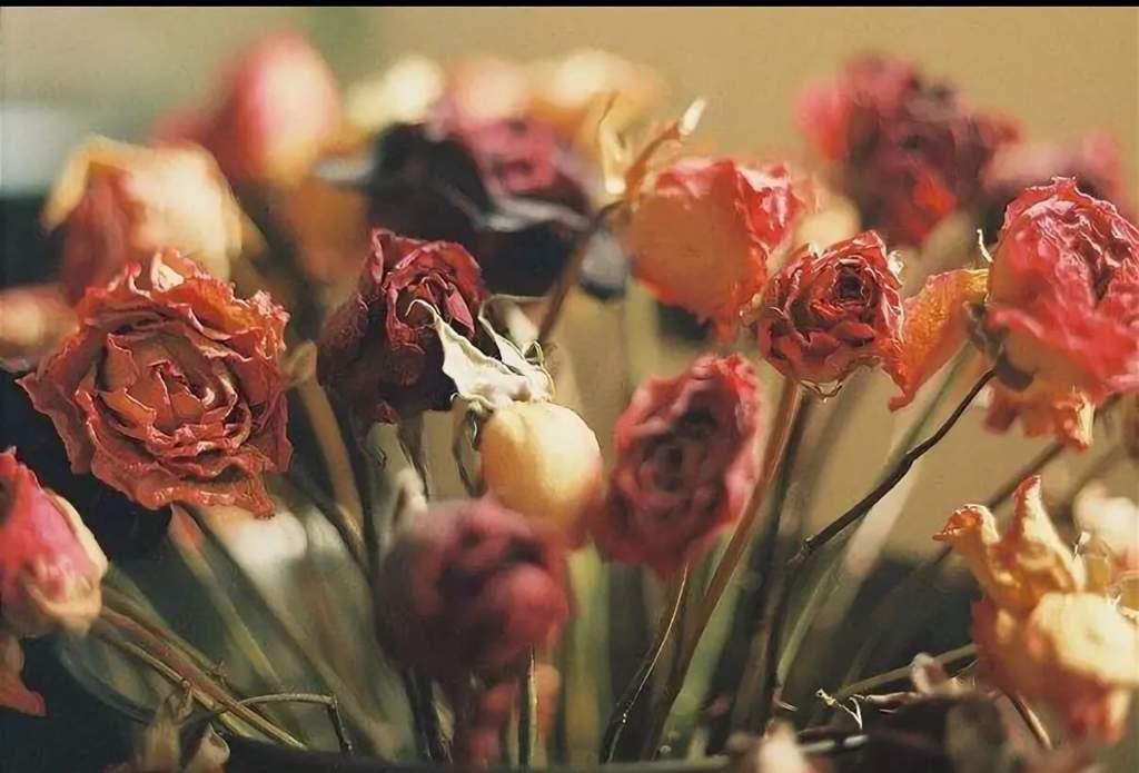 фотографии цветы завяли бывшие