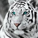 Perfil - Anatoly Kovar 423b9c99ce5e4e3c30925a15fc2d6c291278a6f0r1-512-512v2_128