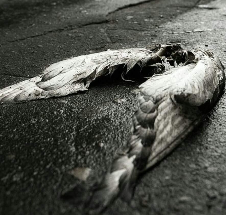 картинки со сломанными крыльями масон