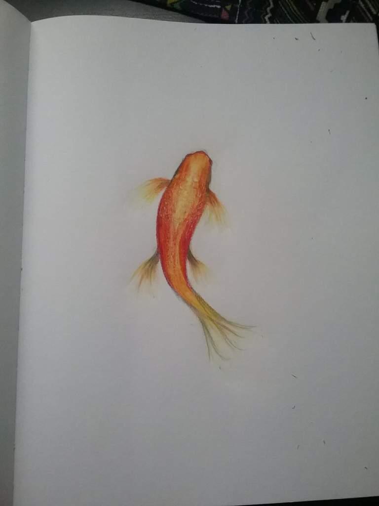 Swimming koi fish   Art Amino