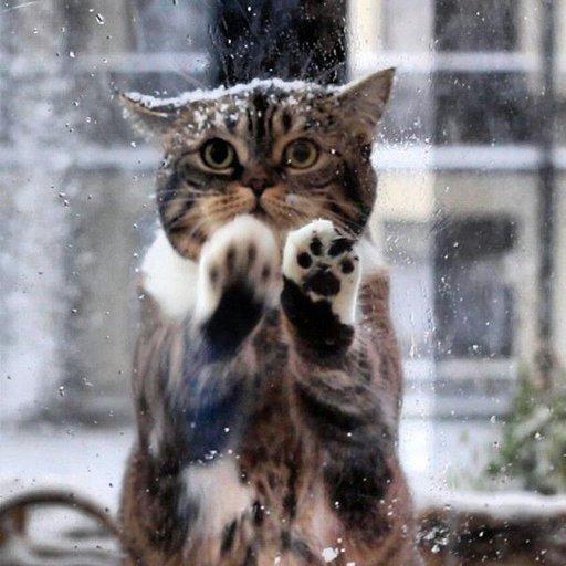 Картинки по запросу кошка на снегу