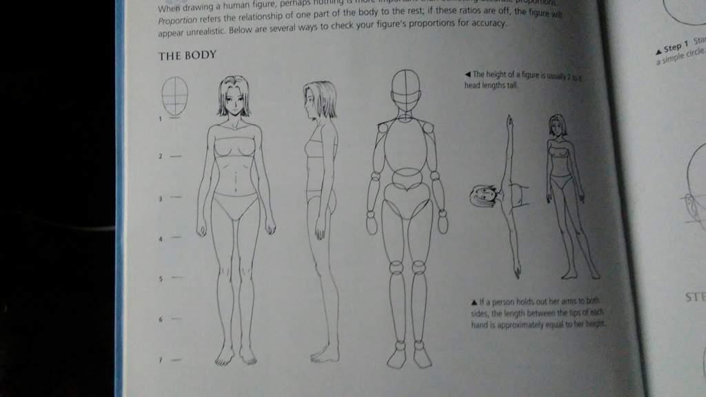 Proportions (female body) | Wiki | Youtube Helper Amino Amino