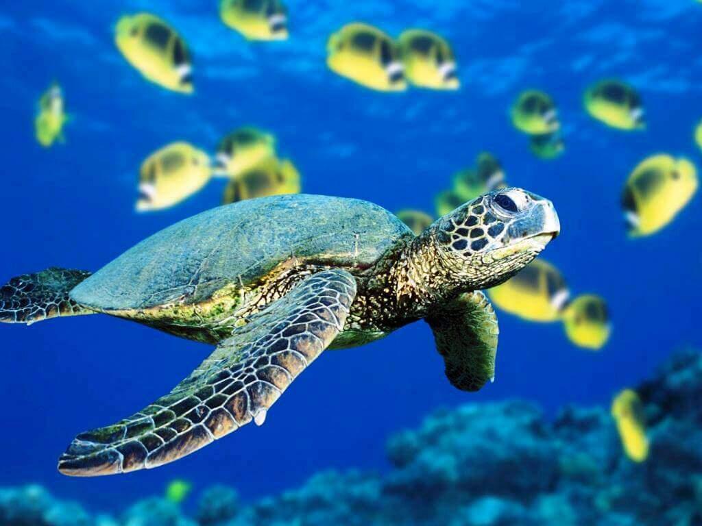 городе кемерово морская черепаха фото и названия меня