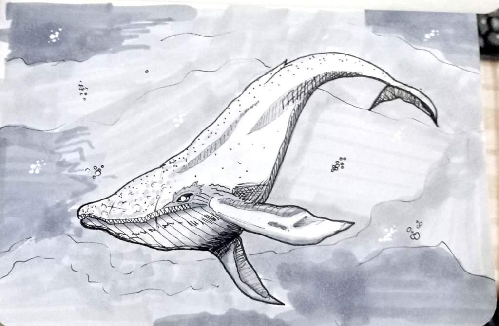 Inktober Inktober2018 Jakeparker Day 12 Whale Zombie Whale