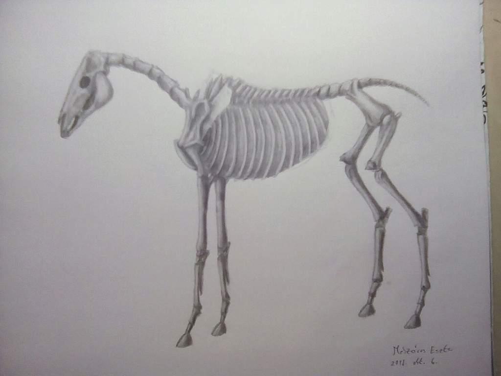 Skeleton Horse Art Amino