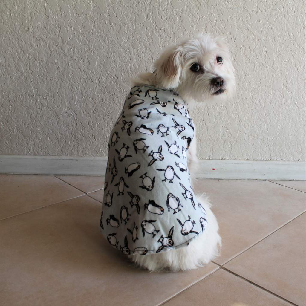 Diy Dog Coat Disney Amino