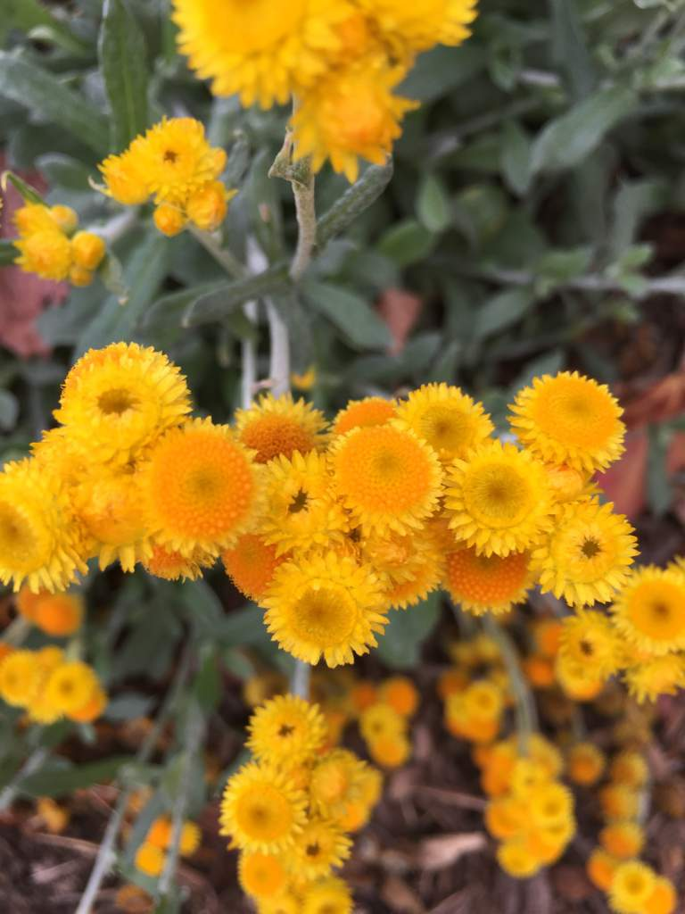 Little Yellow Flowers In A Big Big World Nature Lovers Amino