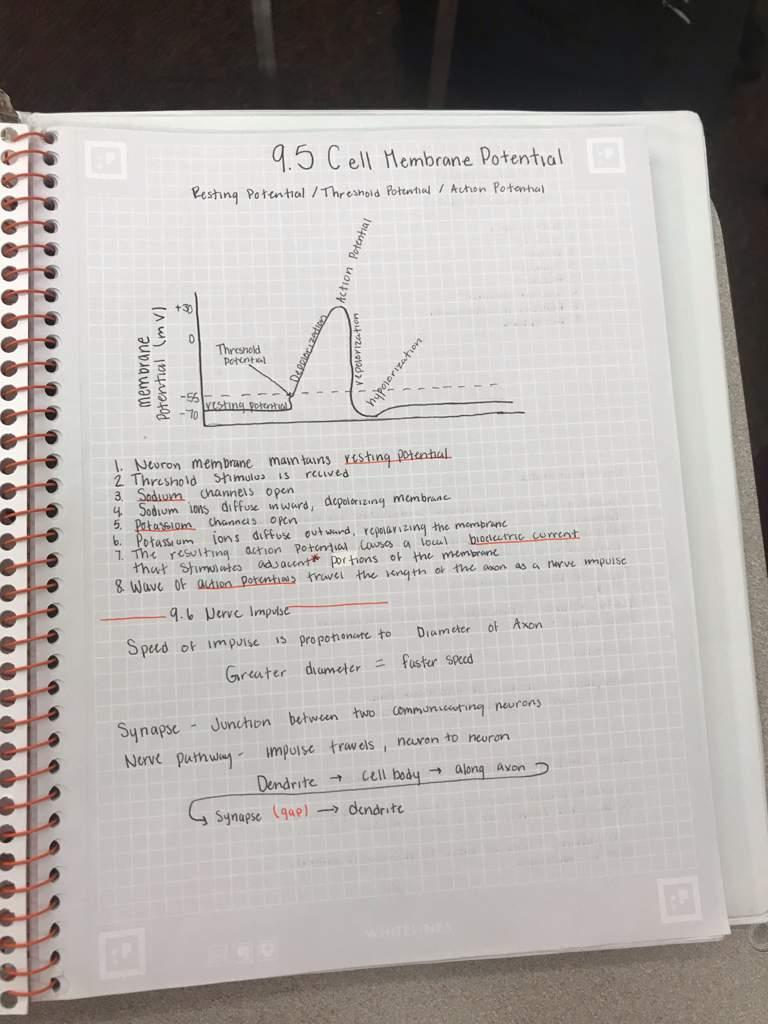 Physiology Notes | Studying Amino Amino