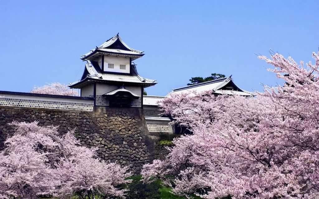 уникальная япония картинки все о японии мариную ягодном