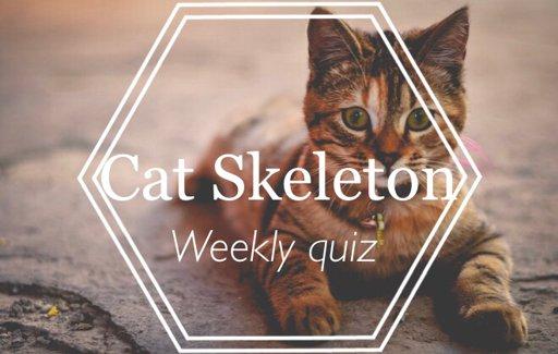 Cat Skeleton~Weekly Quiz | ᐯeterinary ᗰedicine Amino